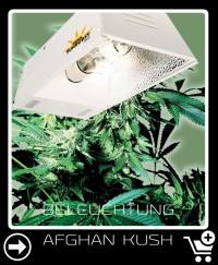 Welche Beleuchtung für Afghan Kush