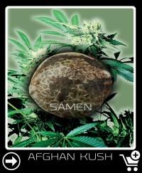 Eine Samen von Afghan Kush