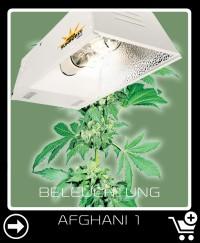 Welche Beleuchtung für Afghani 1