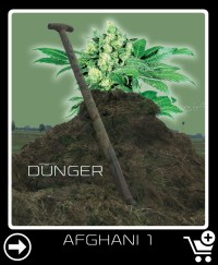 Dünger vor Afghani 1
