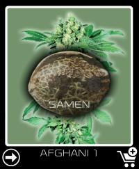 Eine Samen von Afghani 1