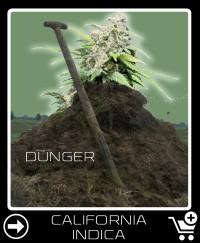 Dünger vor California Indica