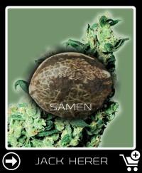 Eine Samen von Jack Herer