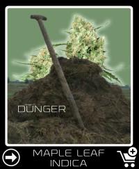 Dünger vor Maple Leaf Indica