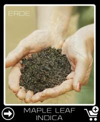 Erde vor Maple Leaf Indica