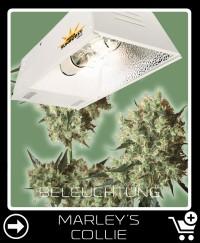 Welche Beleuchtung für Marley S Collie