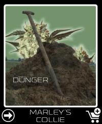 Dünger vor Marley S Collie