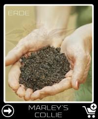 Erde vor Marley S Collie