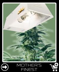 Welche Beleuchtung für Mother S Finest