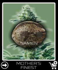 Eine Samen von Mother S Finest