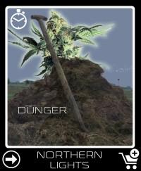 Dünger vor Northern Lights Selbstblühende