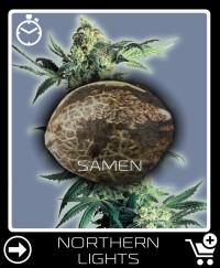 Eine Samen von Northern Lights Selbstblühende