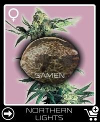 Eine Samen von Northern Lights Feminisierte