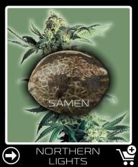 Eine Samen von Northern Lights