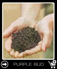 Erde vor Purple Bud Feminisierte