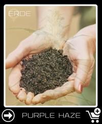 Erde vor Purple Haze Feminisierte