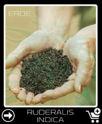 Erde vor Ruderalis Indica