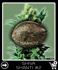 Eine Samen von Shiva Shanti 2