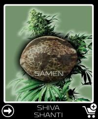 Eine Samen von Shiva Shanti
